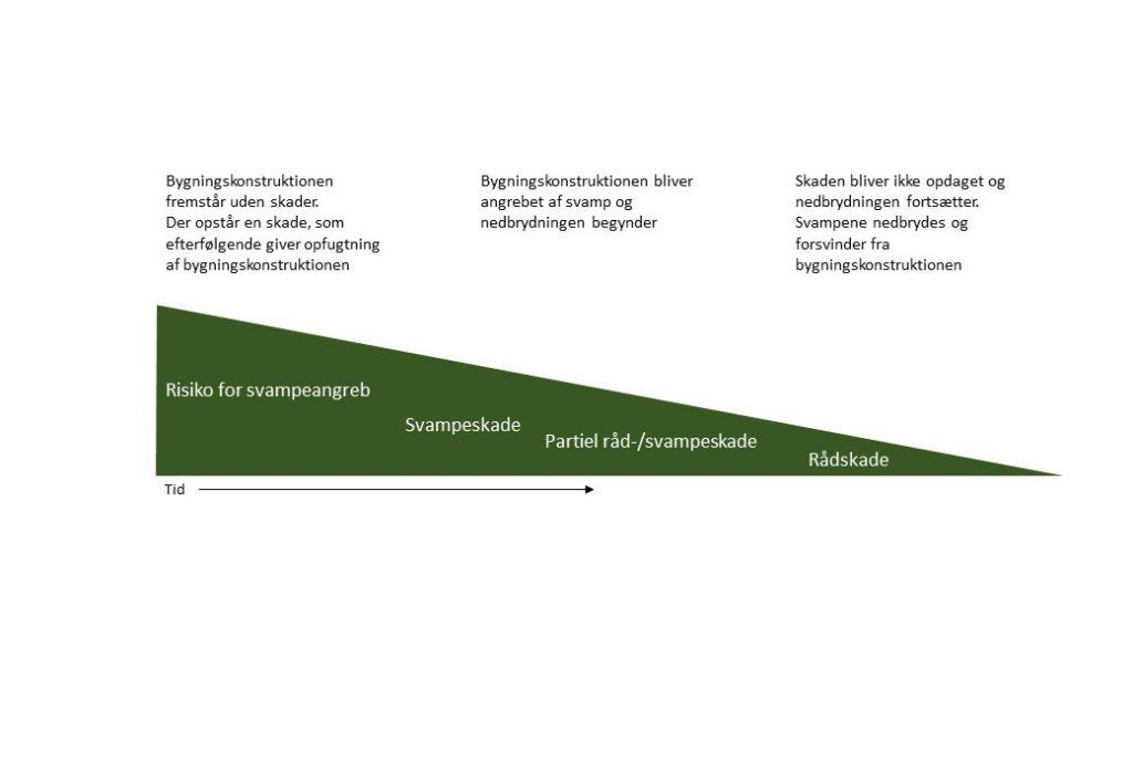Figur over successionen fra svamp til råd